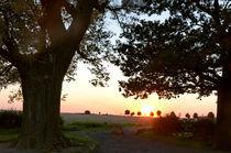Sonnenuntergang zwischen 2 alten Bäumen von Wolfgang Dufner