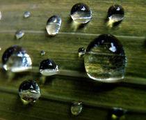 Wassertropfen, Wasserperlen von Simone Cuambe