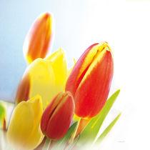Tulpen_002 von E. Axel  Wolf