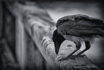 the raven nevermore by Uli Gnoth