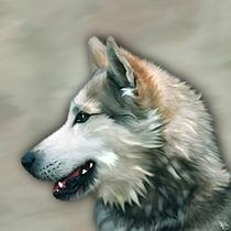 Husky-portrait-1