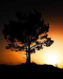 Lonely Tree von Martin Krämer