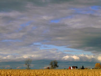 Poetic blue sky and gold corn by Angel Vallée
