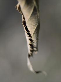 leaf hug by Lucja Lipinska