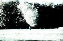 Weißer Baum im Sommer von stunt-art