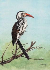 Red-billed-hornbill