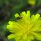 Matingflies