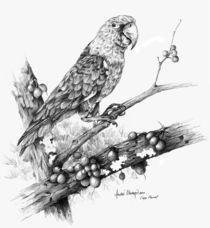 Cape-parrot