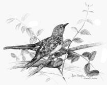 Emerald-cuckoo