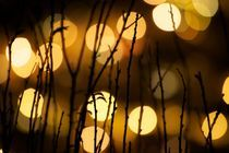Bokeh with branches von Tanel Teemusk