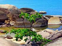 Baum-am-meer-thailand