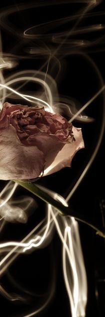 Flowerpower-maxnemo-0000014