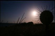 Sawaii (Night) Desert Cactus Carribean von David Hernández-Palmar