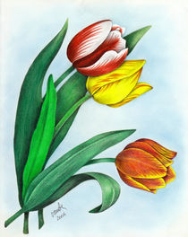 Tulips by Viorica (Violet) Vandor