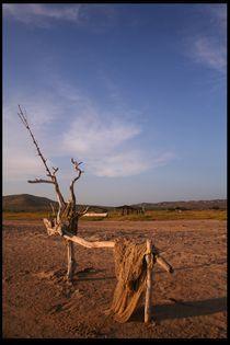 Desierto (Wilderness) von David Hernández-Palmar