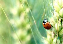 Ladybug by Maria Inden