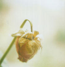 Dying-rose-artflakes
