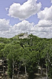 Selva Maya by Julio Guajardo