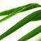 Bambus-img-5944