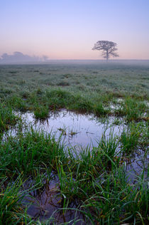 Waterlogged Field at Dawn. von Craig Joiner