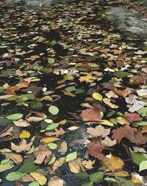 Larson-park-leaves-stream-af