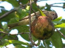 bird3 von Martha Abell