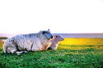 Schaf mit Lamm auf dem Deich von Thomas Schaefer  (www.ts-fotografik.de)