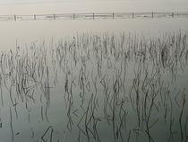 Summer Palace Lake 1 by John Brooks