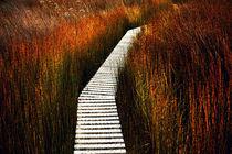 Pathway von Shaina DeCiryan
