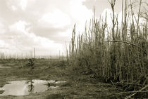 Desolation Everglades by Carolyn Cochran