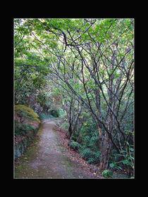 Shaded Path by Inge Meldgaard