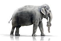 Elefanten vergessen nichts von Werner Dreblow