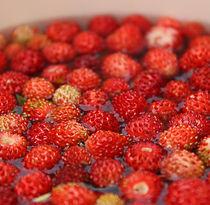 Tiny strawberries by Gyöngyi Balogh