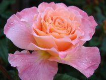 Rose für Theresa :-) by Ka Wegner