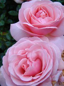 Rose für Ute by Ka Wegner
