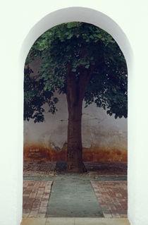 Oaxaca035