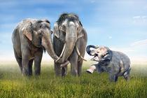 Elefanten Familienglück by Werner Dreblow