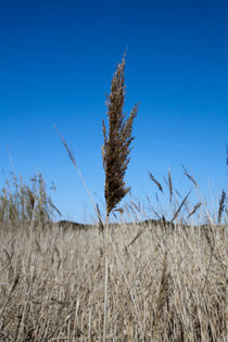 Canet marsh, south of France by Jerome Moreaux