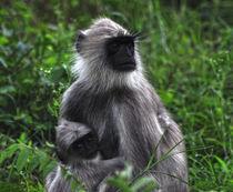 monkey forest von emanuele molinari