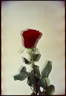Blomst-01