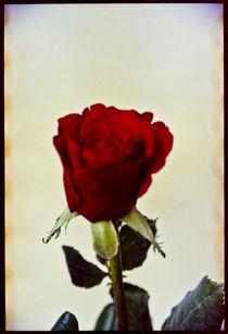 Blomst-08