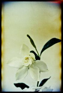 Blomst-05
