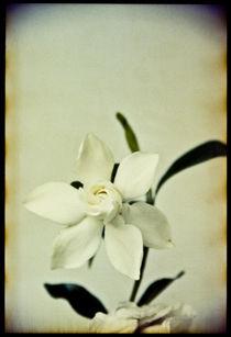 Blomst-06