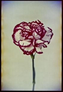 Blomst-04