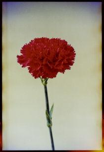 Blomst-07