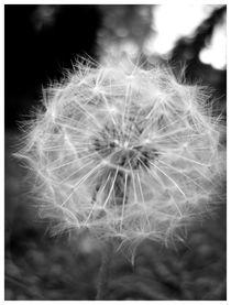 A Puff of Thin Air by jahsi