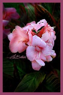 Blush by Tracy Bittner