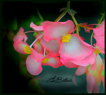 Pink Delicacy by Tracy Bittner
