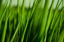 Grünes Gras von sonaeo