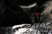 Unforeseen Emergence (horizontal flower) von Raku  Inoue